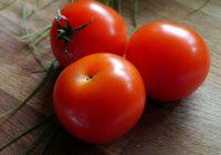 Réussir ses tomates au potager